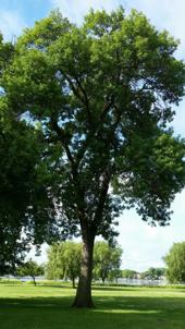 cni-tree